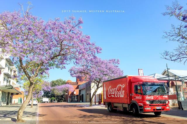 西澳自由行︱伯斯市區Jacaranda藍花楹季.Applecross區夏季限定的紫色浪漫