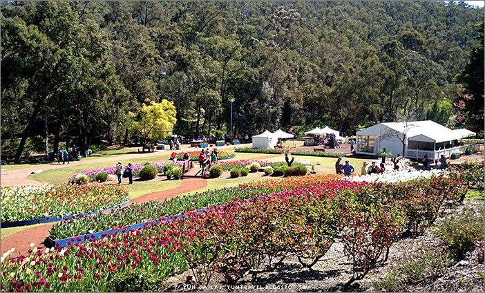 西澳旅遊︱Araluen Botanic Park鬱金香季.伯斯市區春暖花開郊遊趣
