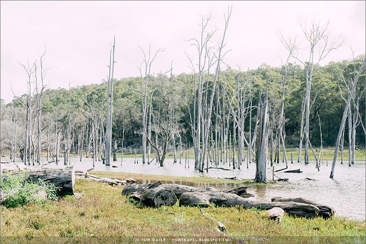 西澳自由行︱澳洲忘憂森林.HARVEY DAM~旅程中的意外驚喜