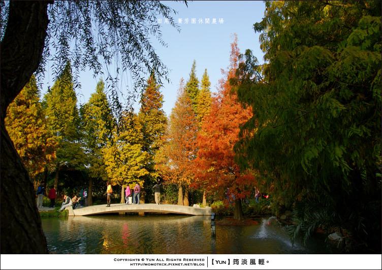 田尾旅遊︱秋末最夢幻的童話之景~菁芳園休閒農場
