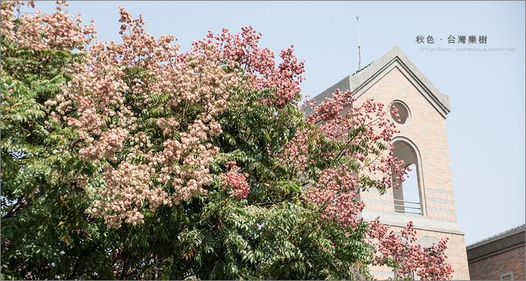 攝影︱秋的到來、變色的美麗世界.首部曲~台灣欒樹