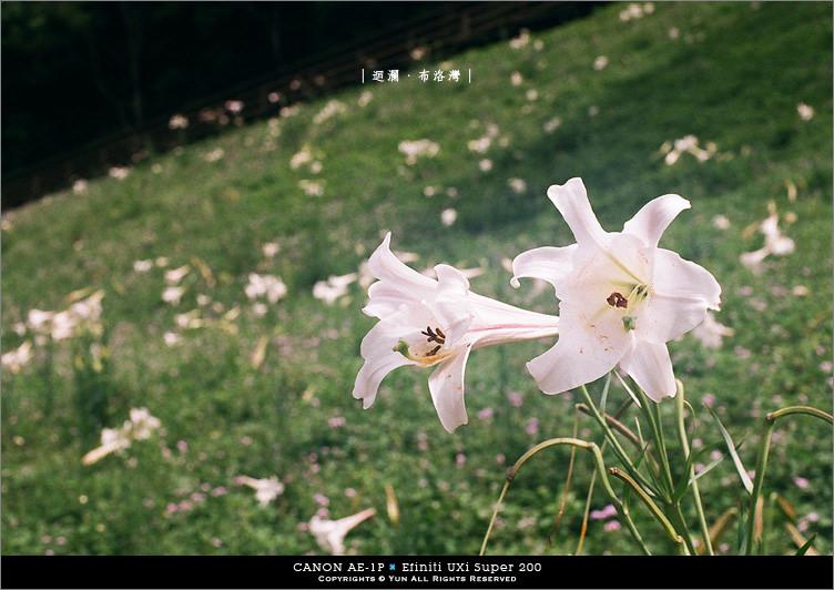 底片︱Canon AE-1P 花蓮島內放鬆*散策旅行DAY1