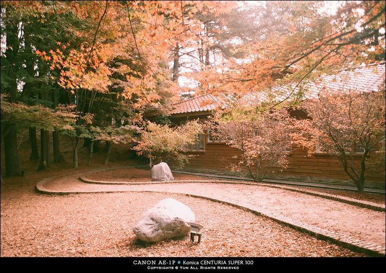底片︱回味、品嚐.那秋的季節旅行~福壽山、武陵農場、銅鑼杭菊、新社花海節