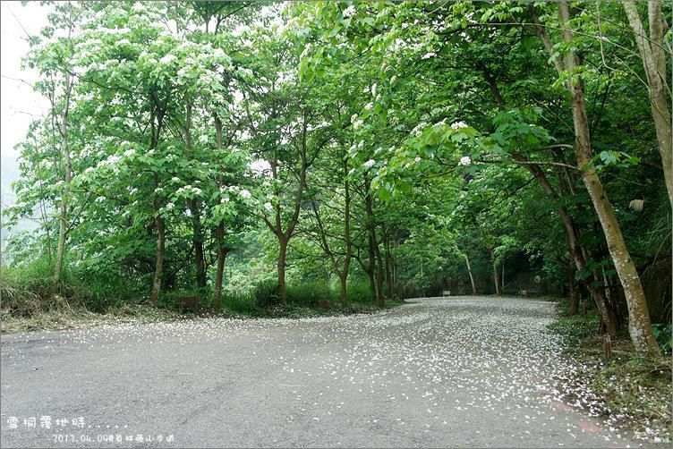 員林景點︱花季的接力賽~2013桐花季.首站.藤山步道