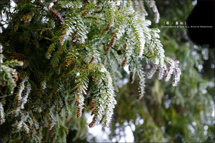 和平景點︱深冬限定.銀白視界~思源啞口.霧淞之景