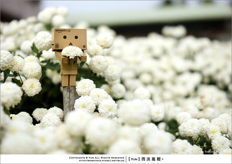 銅鑼旅遊︱那場專屬11月份的花雪之季~銅鑼杭菊花季