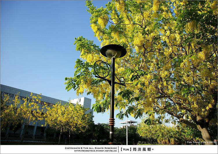 台中旅遊︱台中市興大路.隨風飄落黃金雨、悠閒慢步盡風情