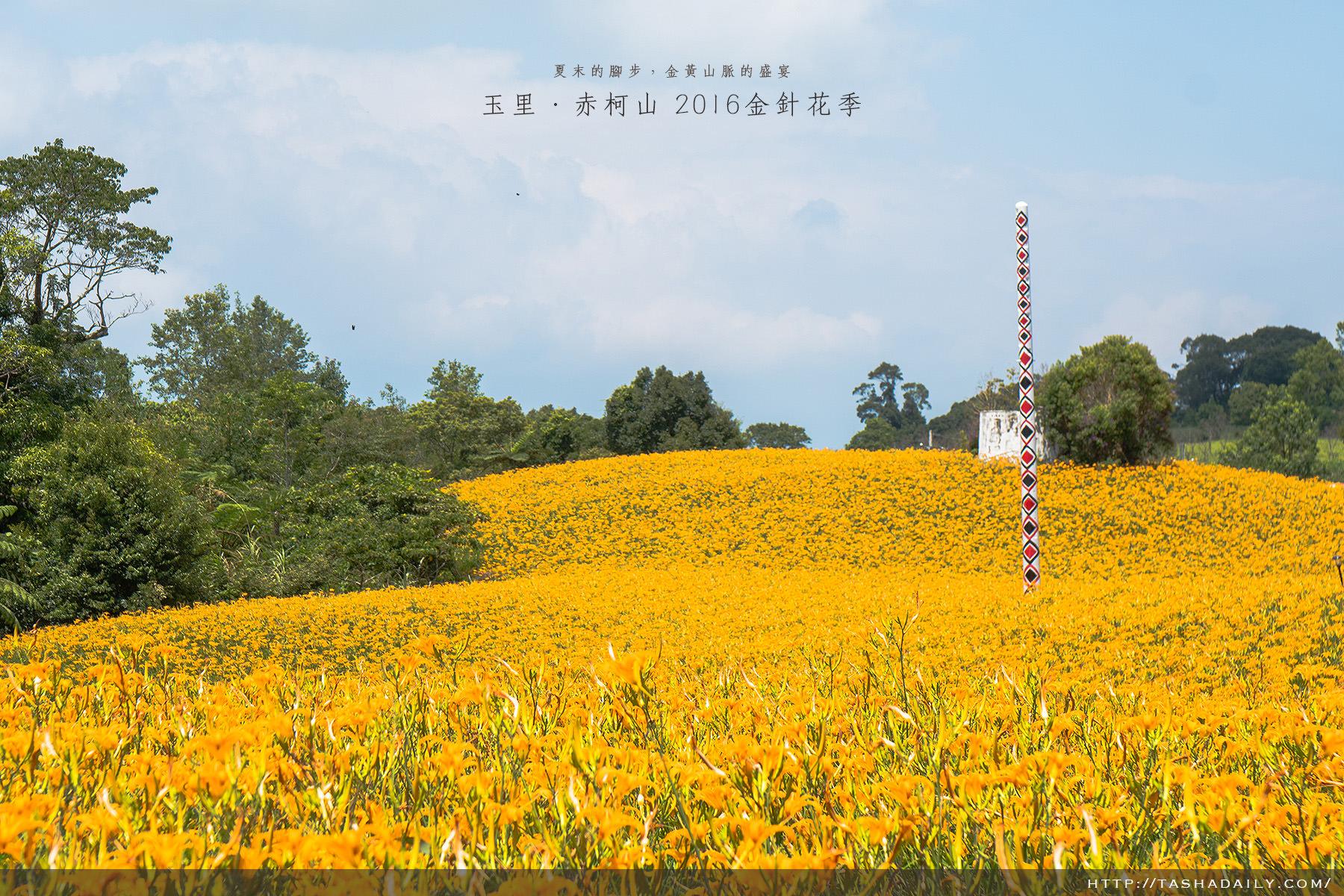 玉里旅遊︱赤柯山 金針花季.2016夏末最美的金黃山脈