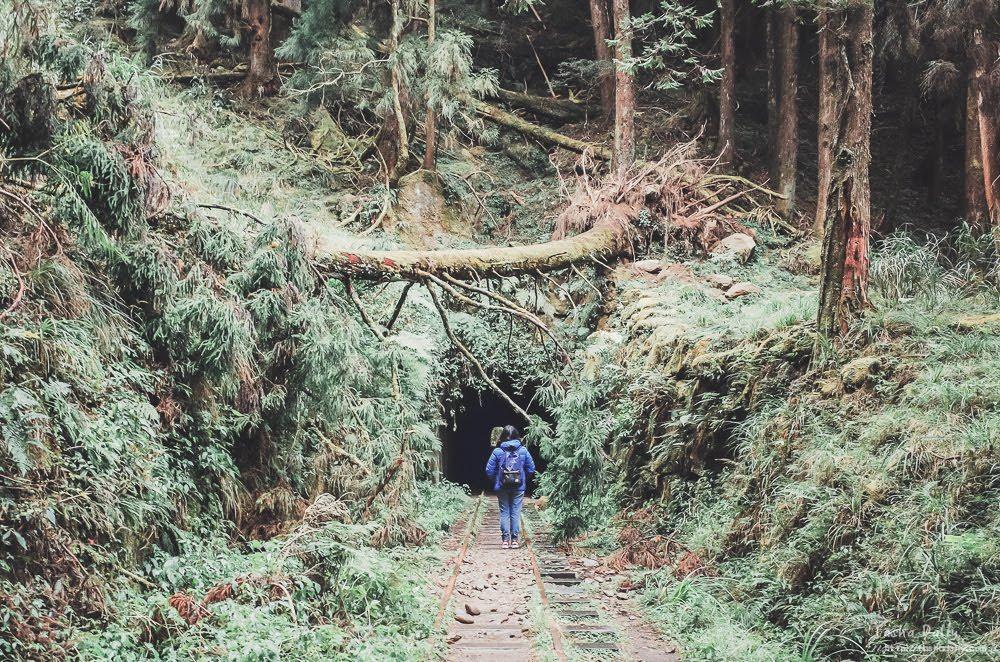 嘉義旅遊︱阿里山、眠月線.沉睡中的美麗山林鐵路健行步道