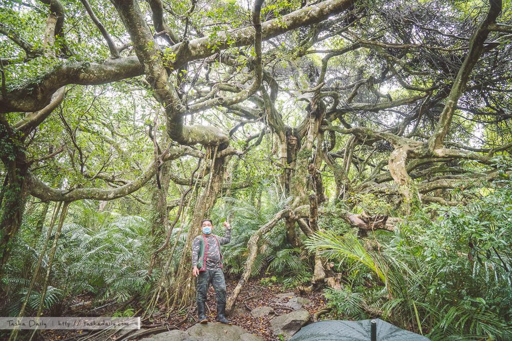 延平鄉旅遊︱台東.鸞山森林文化博物館、跟著樹去認識鸞山部落