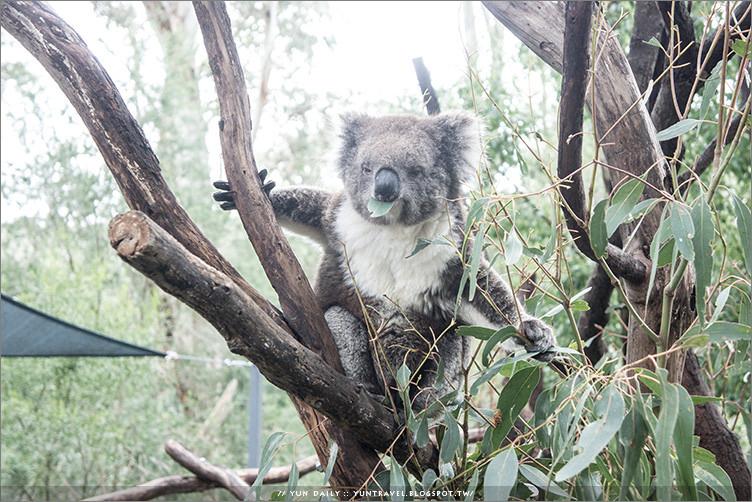 南澳自由行︱Gorge Wildlife Park.抱無尾熊最便宜的動物園