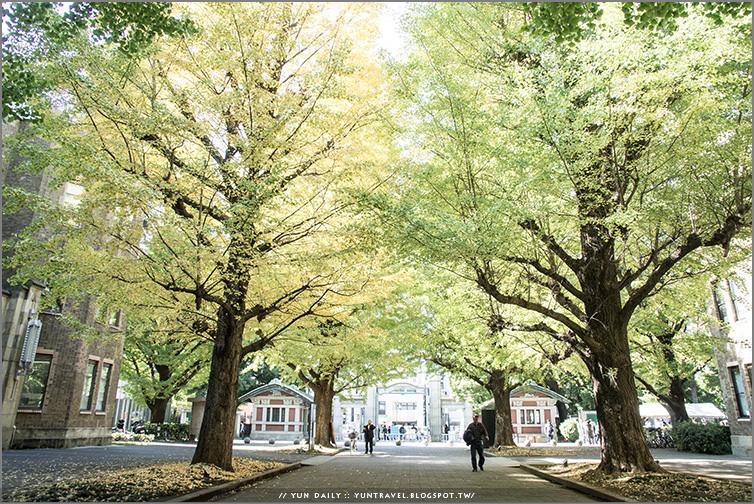 東京自由行︱東京大學.秋之銀杏散策、慢步金黃大道