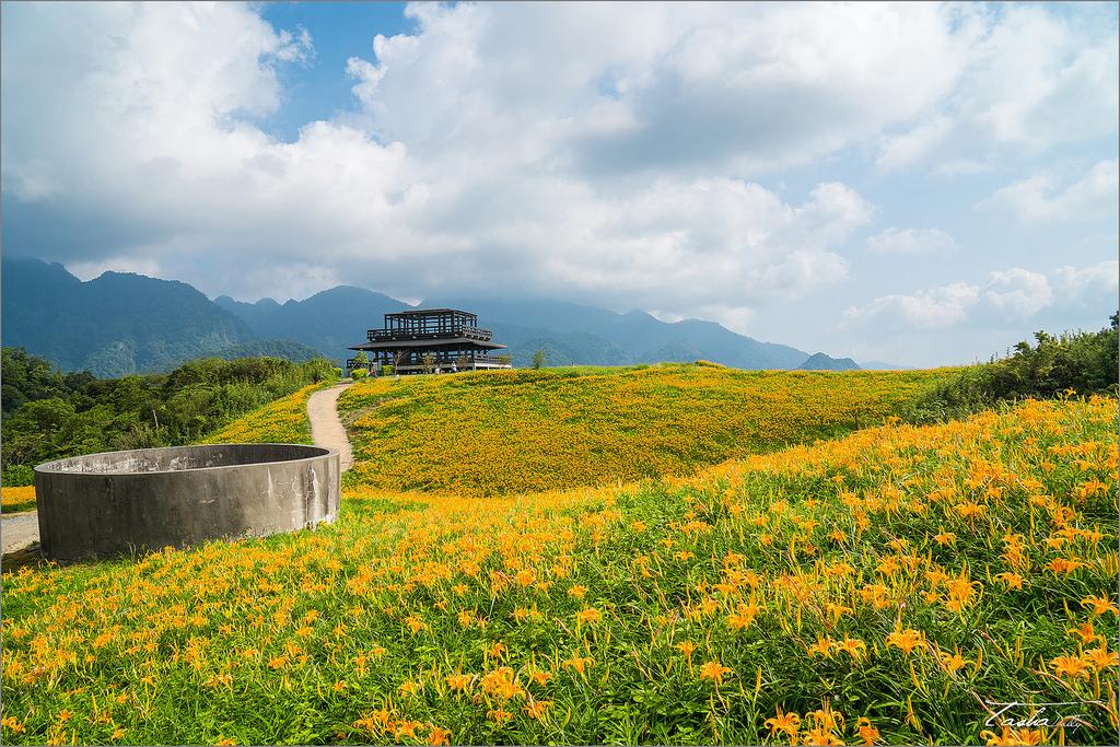 玉里旅遊︱台灣小瑞士.六十石山~佇立高點、挑望金黃山景