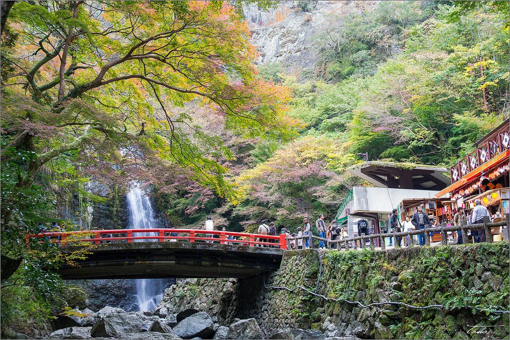 大阪自由行︱箕面森林公園.紅楓中的森林瀑布