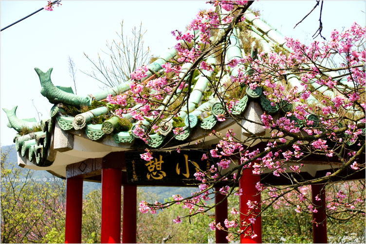 陽明山旅遊∣2011台北花季.陽明山花季