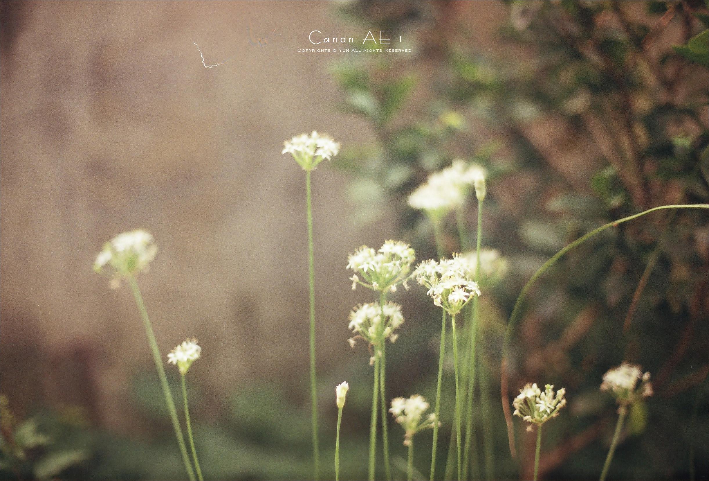底片︱Canon AE-1P 第一章.2011.09.27~10.27