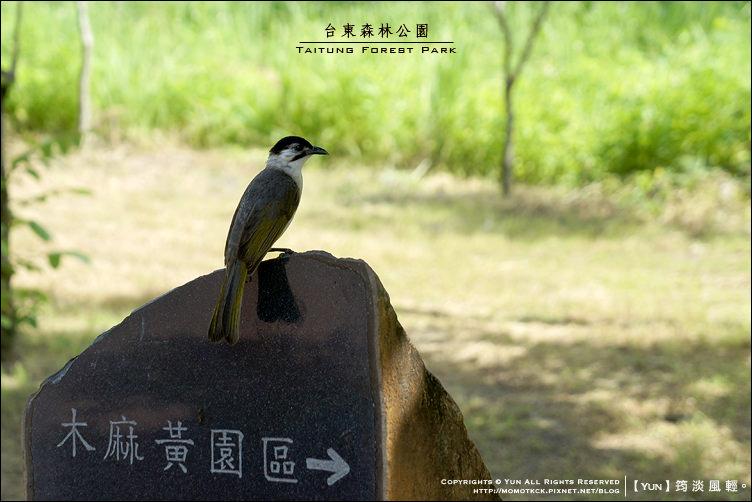 台東森林公園 014.jpg