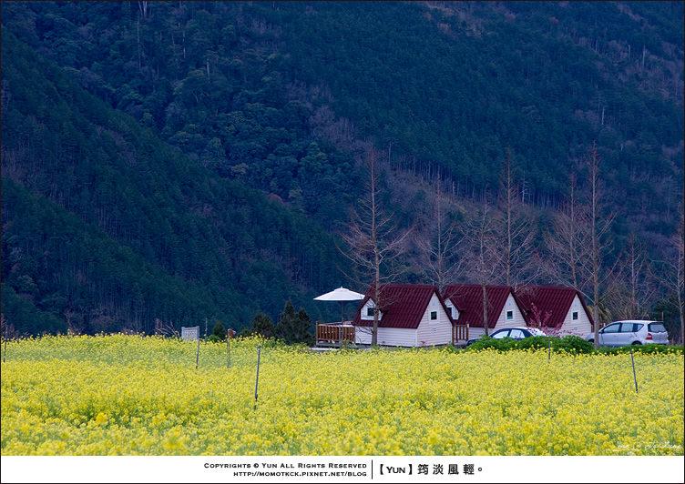 旅行︱台中和平.武陵農場~綿延山巒中的金黃地毯.油菜花田