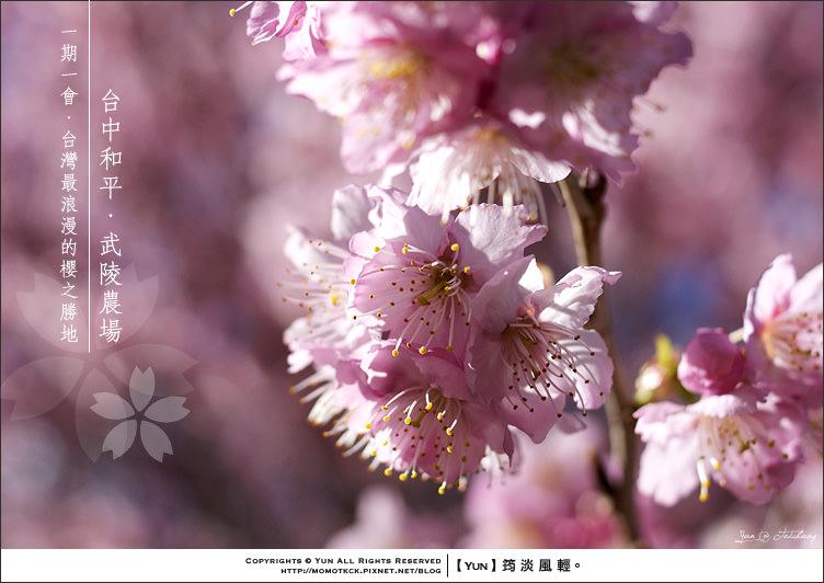 旅行︱台中和平.2012武陵櫻花季~全台最浪漫的賞櫻勝地.上篇