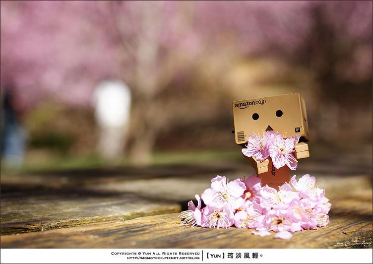 旅行︱台中和平.2012武陵櫻花季~絕美的櫻之隧道.爆圖下篇